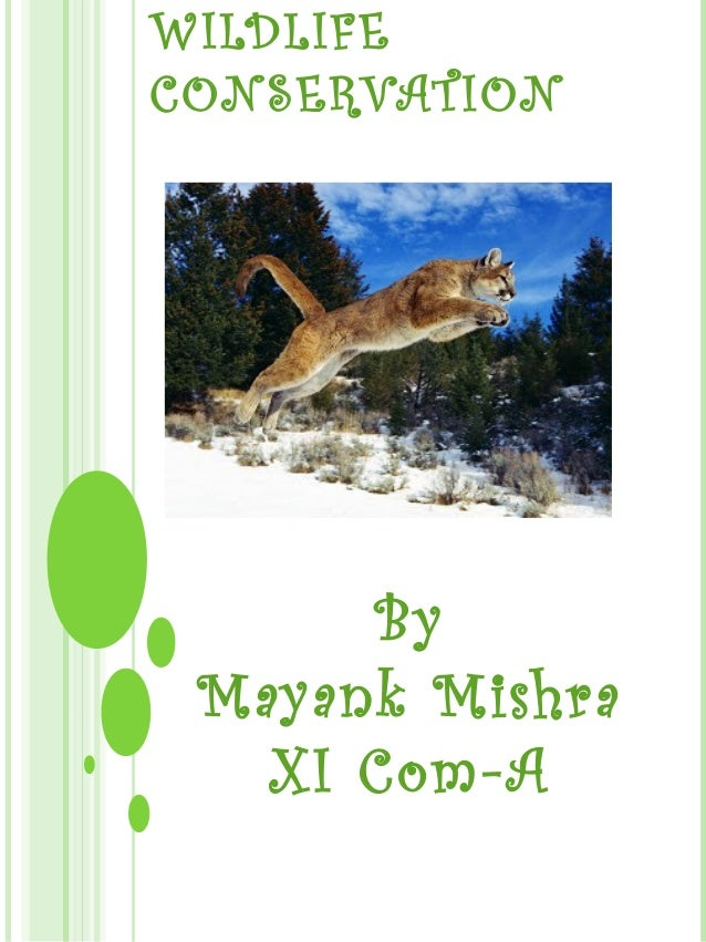 WILDLIFE CONSERVATION By Mayank Mishra XI Com-A
