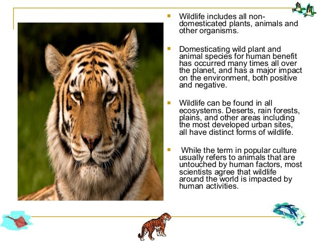 information about wildlife conservation The lee county conservation board in cooperation with the lee county chapter pheasants forever has information and materials available what are some of the wildlife recommendations wildlife management recommendations vary because all agricultural and livestock practices must be considered as the plan is developed.