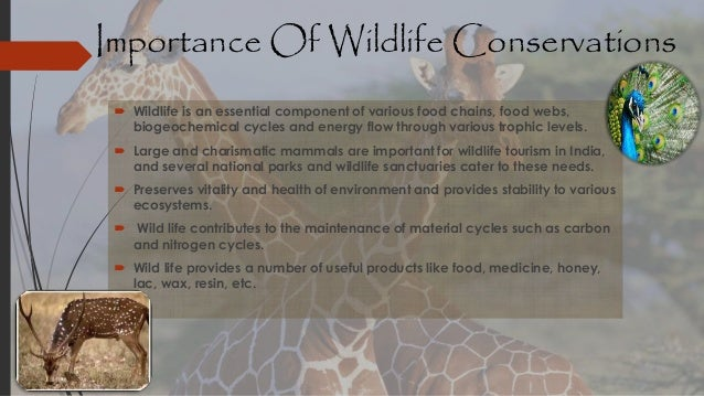 role of students in wild life conservation That view of the role of nature was common until the mid 1800s when the conservation movement was born - wildlife students two prizes, one of role in the.