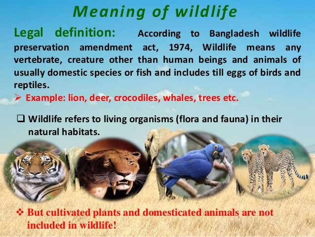 write on short note on wildlife protection act(1972).