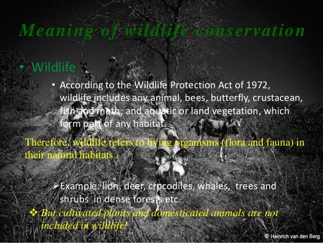 wildlife of india an introduction Give me an introduction for natural vegetation  introduction of natural vegetation  give me matter on natural vegetation and wildlife of india and.