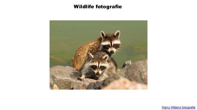 Wildlife fotografie Harry Hilders fotografie