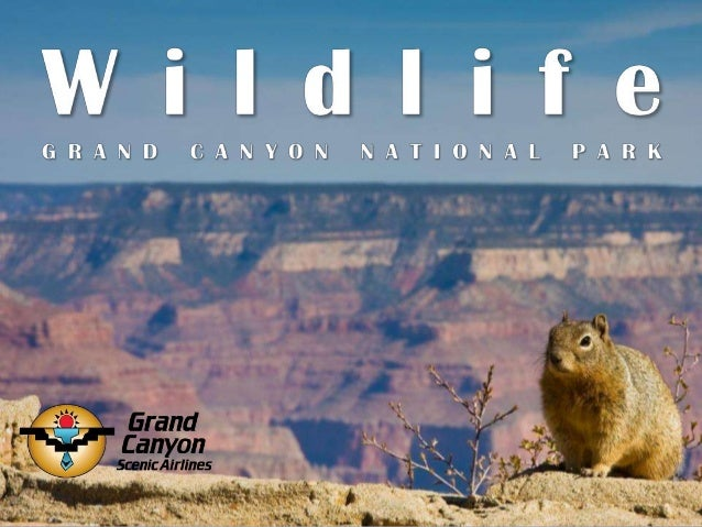 What makes Grand Canyon National Park so remarkable is that it boasts five different ecosystems throughout the park, all s...