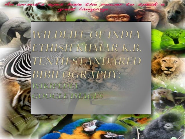  Wildlife includes all non-domesticated plants, animals and other organisms.  Domesticating wild plant and animal specie...