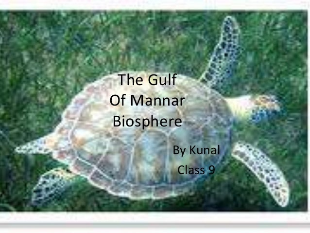 The Gulf  Of Mannar  Biosphere  By Kunal  Class 9