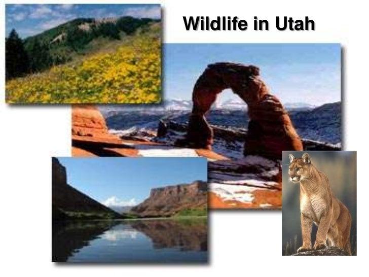 Wildlife in Utah
