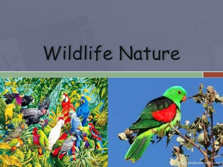 Wildlife Nature5/22/2012                 http://madrastravels.com/