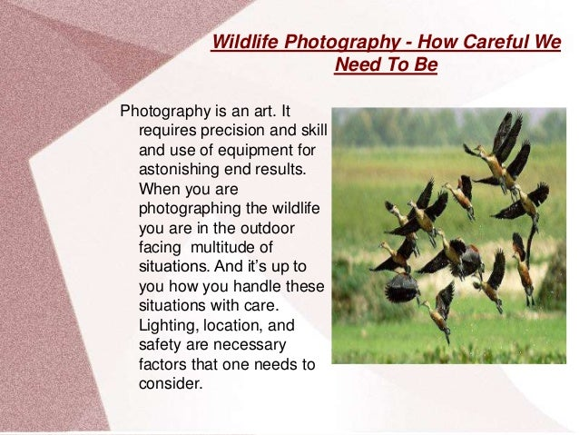 Wildlife Photography - How Careful We Need To Be Photography is an art. It requires precision and skill and use of equipme...
