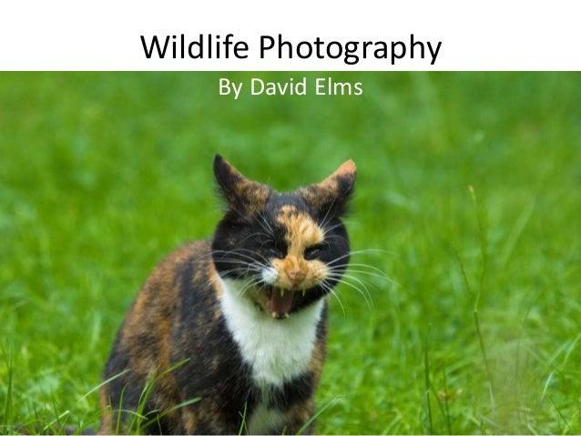 Wildlife Photography By David Elms