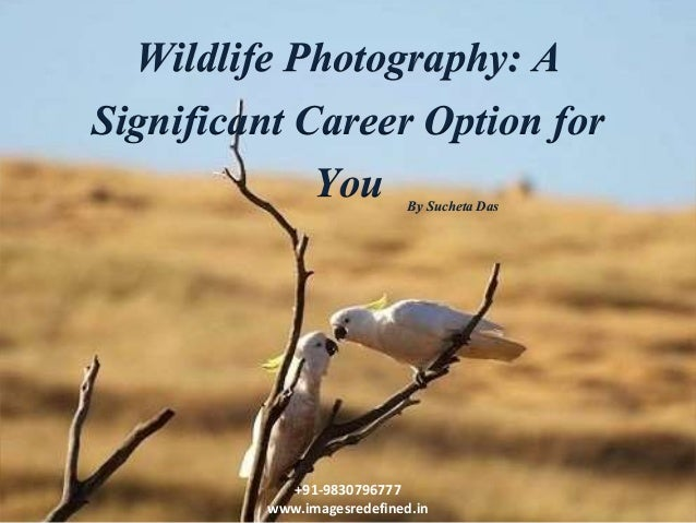 Wildlife Photography: A Significant Career Option for You +91-9830796777 www.imagesredefined.in By Sucheta Das