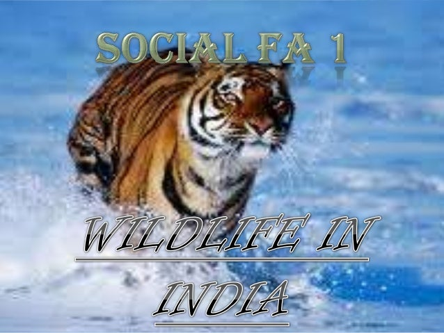 The Wildlife in India is a mix of species of different types of organisms.  It is home to tigers, lions, leopards, snow le...