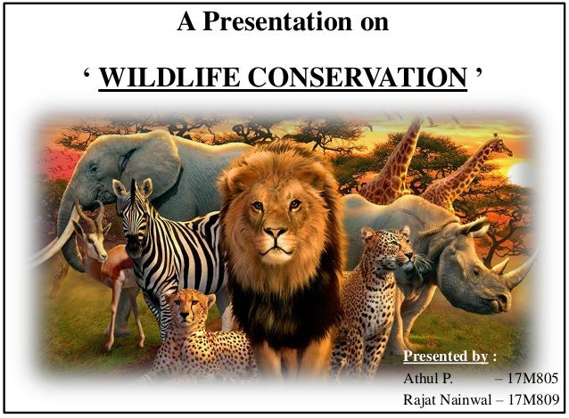 A Presentation on ' WILDLIFE CONSERVATION ' Presented by : Athul P. – 17M805 Rajat Nainwal – 17M809