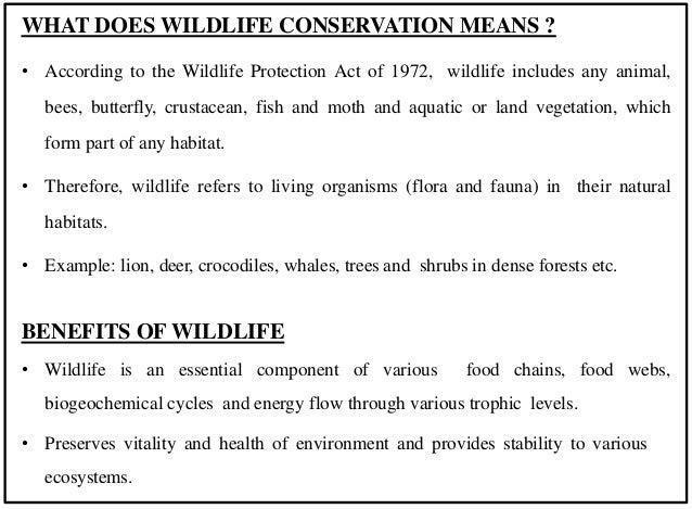 Wildlife presentation Slide 2