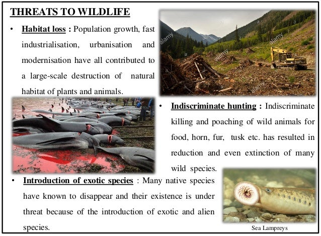 Wildlife presentation Slide 3