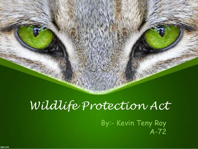 essay about protecting wild animals 4 save wildlife essay save the manatees - 961 words ms kirkpatrick ap english 12 02052013 save the manatees background information the marine mammal protection act was enacted in october 21, 1972 the act protects the taking of marine mammals, in response to some animals reaching endangerment or near.