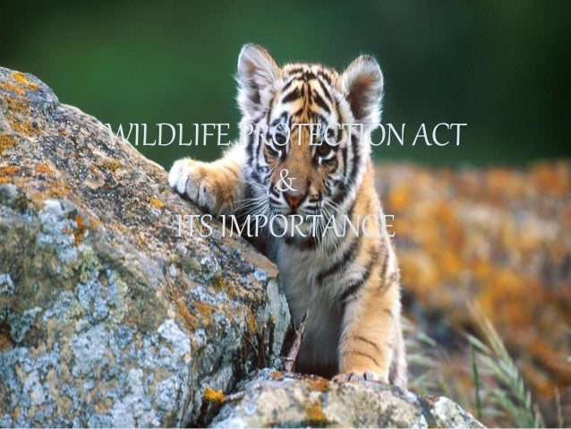 Do you have some interesting wildlife news? April 6, 2018 edition