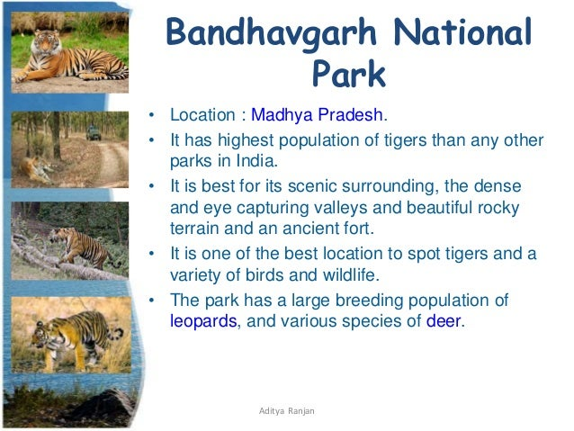 essay on national parks in india Essay on kaziranga national park: total area: initially when it was a sanctuary, its area was 166, sq km but the area of national park was increased to 84979 sqkm.