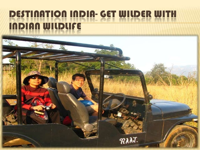 DESTINATION INDIA- GET WILDER WITH INDIAN WILDLIFE