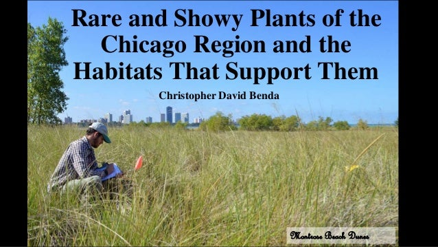 Rare and Showy Plants of the Chicago Region and the Habitats That Support Them Christopher David Benda Montrose Beach Dunes