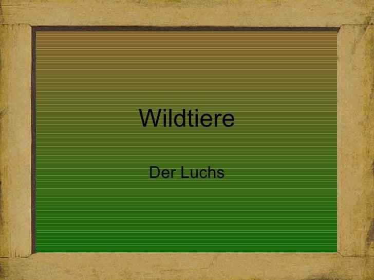 Wildtiere Der Luchs