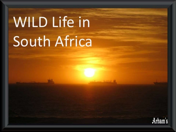 WILD Life in South Africa<br />