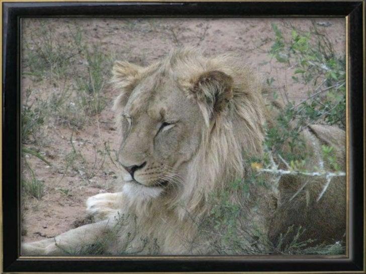 Wild life SA 1
