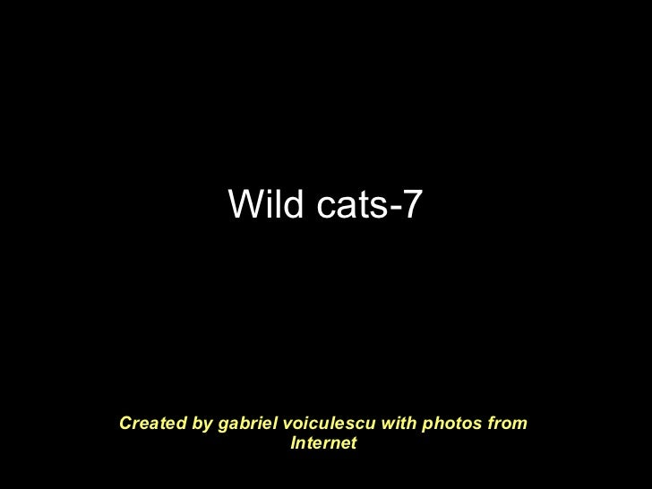 Wild cats-7 Created by gabriel voiculescu with photos from Internet