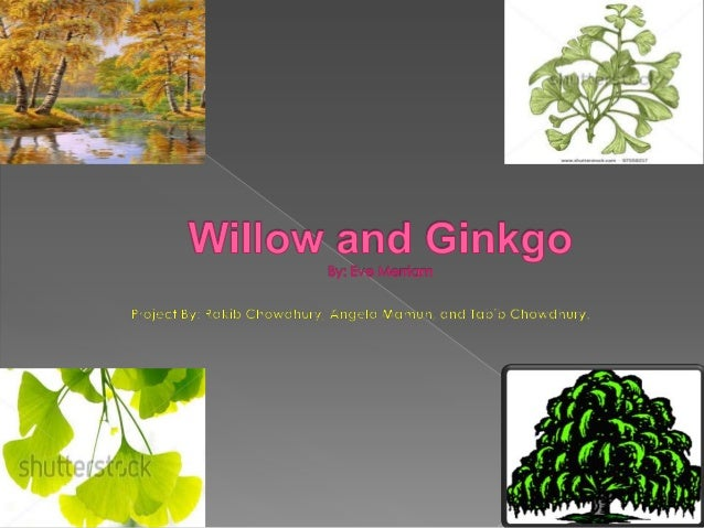 """""""simile willow and ginkgo"""" This piece is my response to a poem called  simile: willow and ginkgo."""