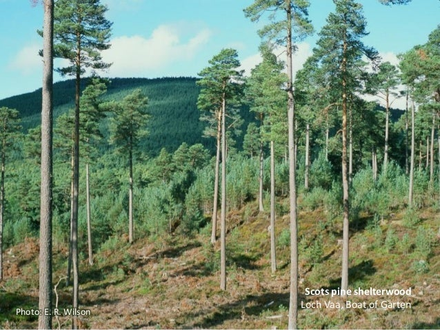 Continuous Cover Forestry An Alternative Model For The