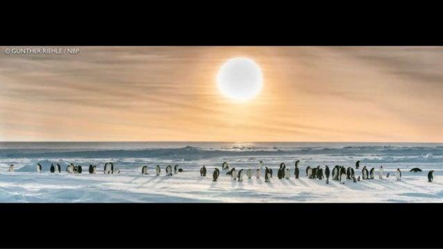GRAND PRIZE: Polar Bear and Cubs