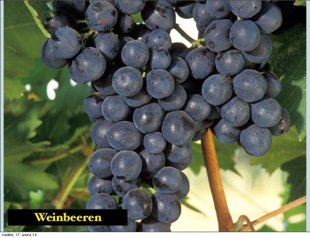 Wine Slide 3