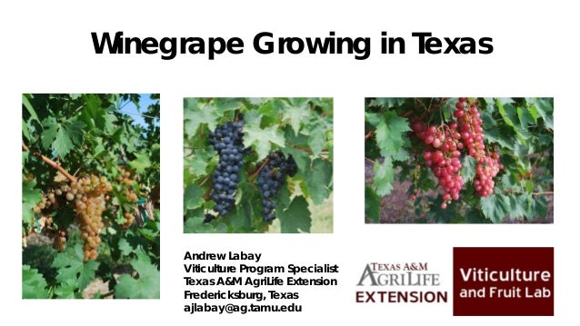 Winegrape Growing in Texas Andrew Labay Viticulture Program Specialist Texas A&M AgriLife Extension Fredericksburg, Texas ...