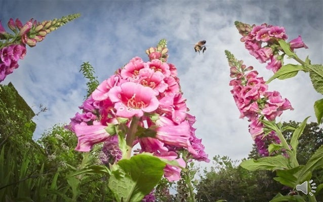 The annual RHS photography competition attracts stunning images of flora and fauna – here are some of the winning pictures...