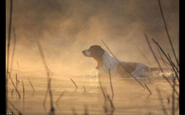 Kennel Club dog photographer of the year 2016 The Kennel Club has announced the winners of its annual Dog Photographer of ...