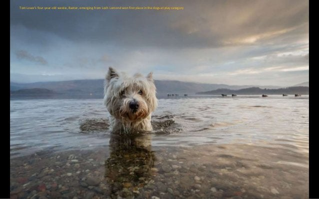 Loyalty: Michael Higginson, from Preston, Lancashire, took a photo of his brother Dale with family pet Esta. It won the As...