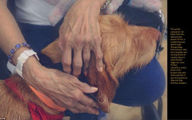 Colombian Adriana Bernal came 2nd in the Oldies catergory with her image of a 10-year- old Irish Setter resting in an arm ...