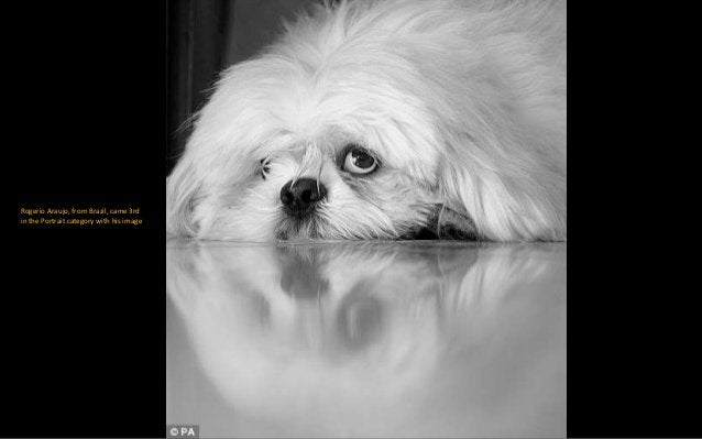 Smile! Advait Huggahalli, from the US, took this adorable photo. It picked up 3rd place in the I Love Dogs Because.. (unde...