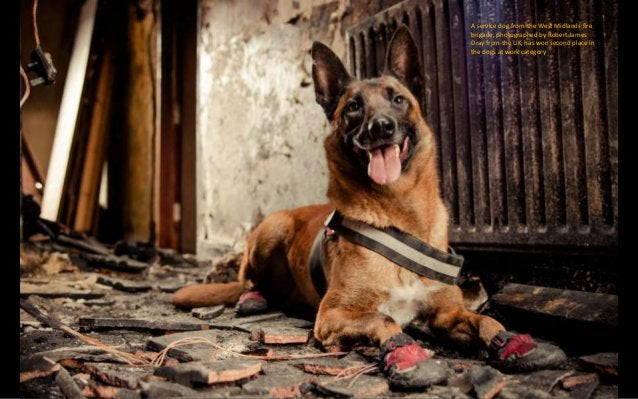 Elouise Leland won second place in the dogs at play category for her image of two puppies