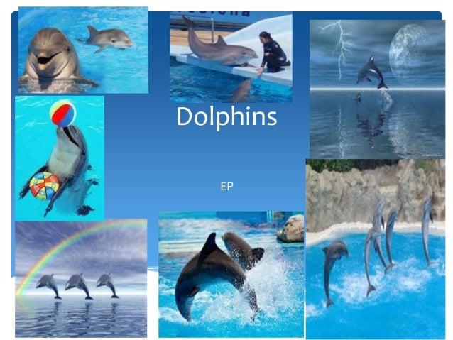 DolphinsEP