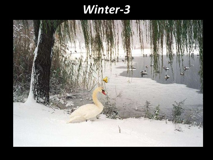 Winter-3<br />