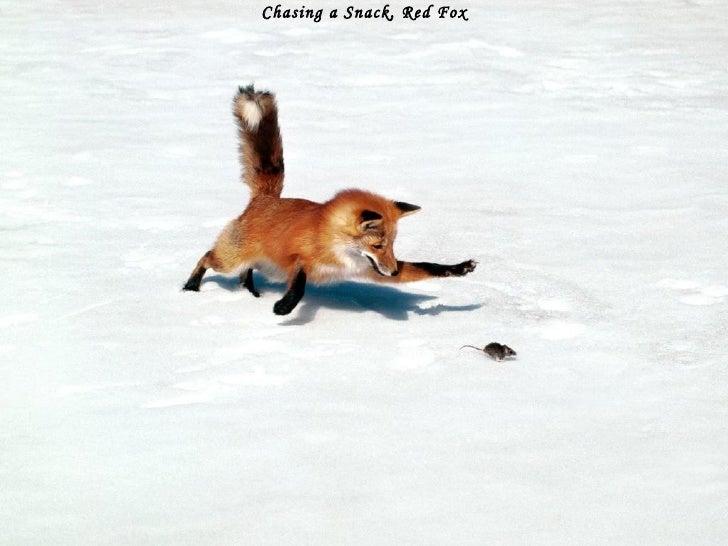 Winter Images Slide 2
