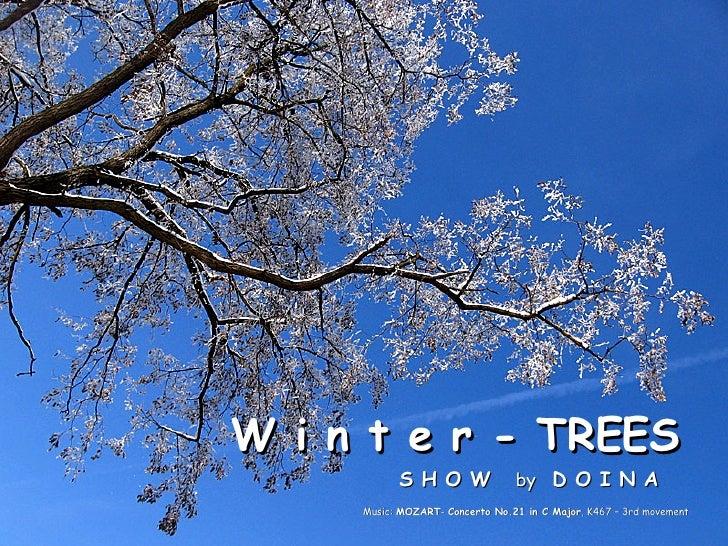 www.slideshare.net/doina Copyright reserved W i n t e r - TREES  S H O W  by  D O I N A Music:  MOZART -  Concerto No.21 i...