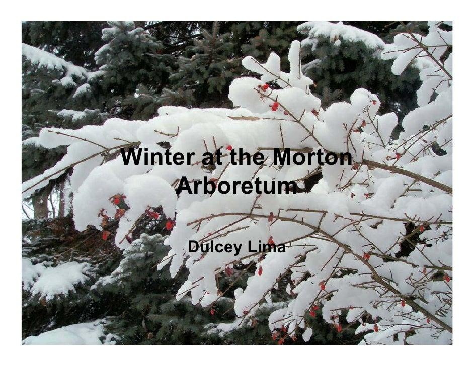 Winter at the Morton     Arboretum       Dulcey Lima