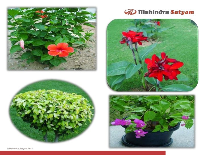 Winter Flowers At Mahindra Satyam S Infocity Hyderabad