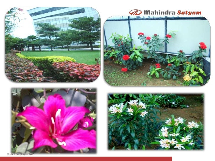 Winter Flowers At Mahindra Satyam S Infocity Hyderabad