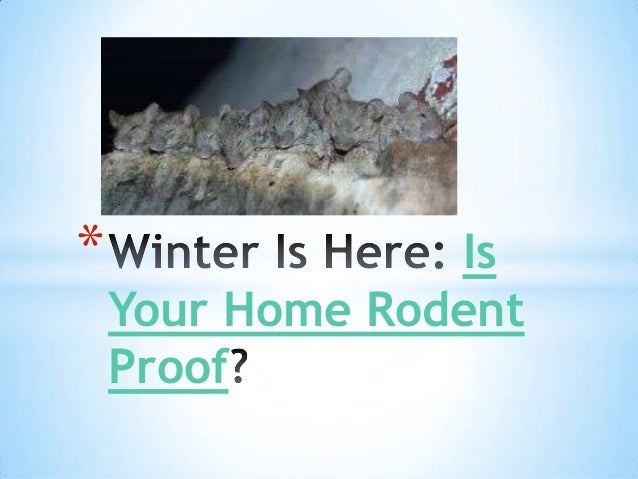*  Is Your Home Rodent Proof