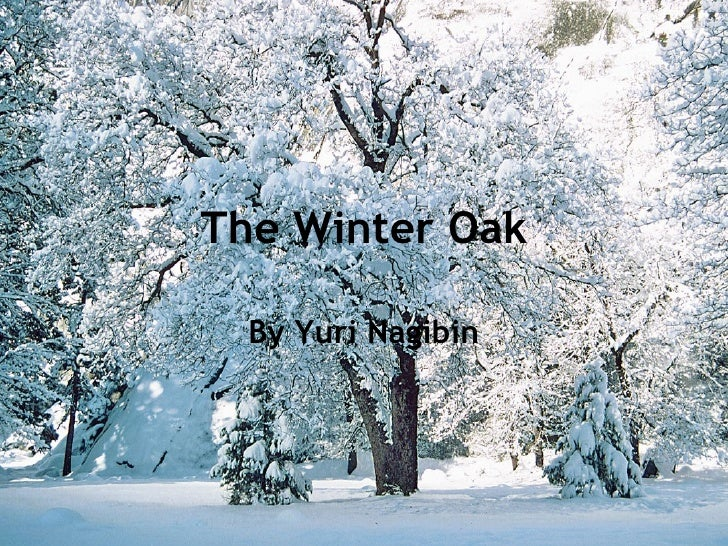 The Winter Oak By Yuri Nagibin