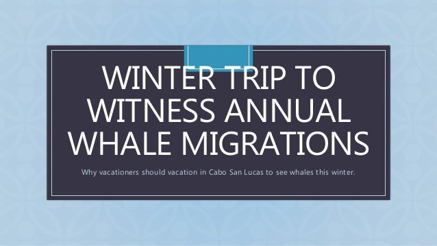 C WINTER TRIP TO WITNESS ANNUAL WHALE MIGRATIONS Why vacationers should vacation in Cabo San Lucas to see whales this wint...