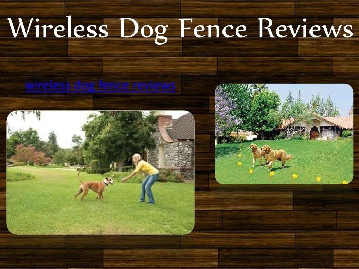 wireless dog fence reviews