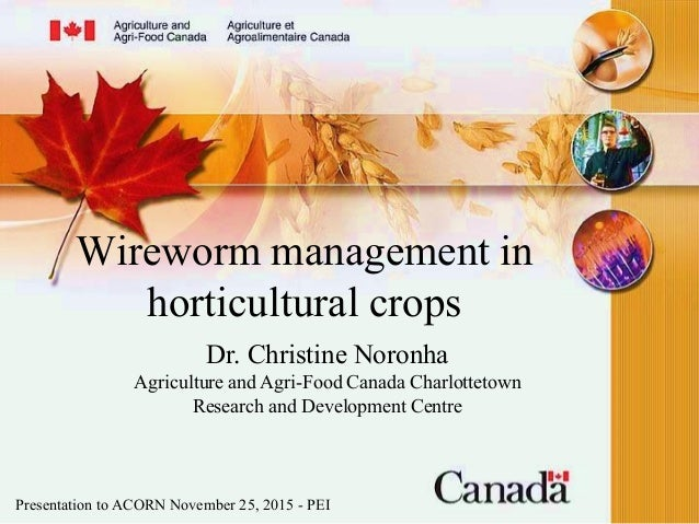 Wireworm management in horticultural crops Dr. Christine Noronha Agriculture and Agri-Food Canada Charlottetown Research a...